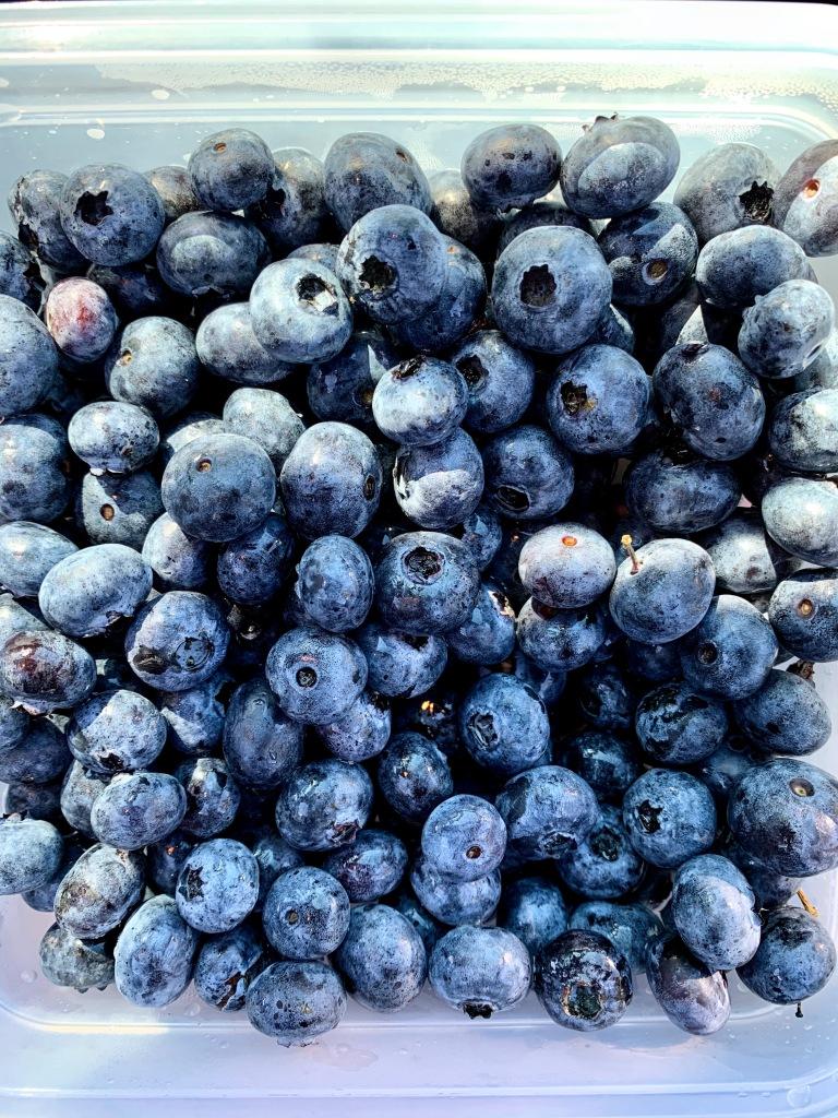 Big juicy blueberries!